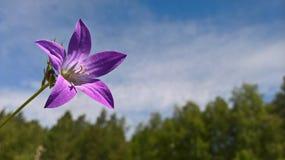 Fiore di Thee dei sogni del sammer fotografia stock