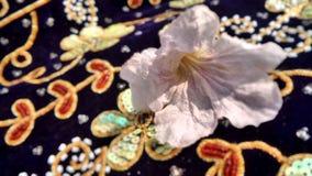 Fiore di tromba rosa su velluto viola scintillante Fotografia Stock