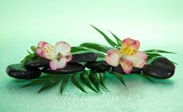 Fiore di un alstroemeria e delle pietre nelle gocce Immagine Stock Libera da Diritti