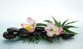 Fiore di un alstroemeria e delle pietre nelle gocce Fotografie Stock