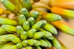Fiore di vera dell'aloe con i dettagli Fotografie Stock Libere da Diritti