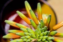 Fiore di vera dell'aloe con i dettagli Fotografia Stock