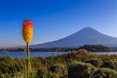 Fiore di vera dell'aloe con la montagna di Fuji sulla vista del fondo dal lago Kawaguchi Fotografie Stock Libere da Diritti