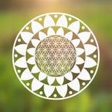 Fiore di vettore del simbolo di vita e Lotus Flower su uno sfondo naturale Immagine Stock