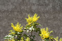 Fiore di Yelow fotografie stock libere da diritti