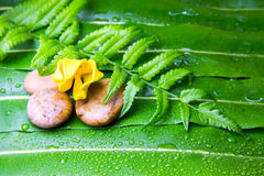 Fiore di ylang ylang sulle foglie verdi Fotografie Stock Libere da Diritti