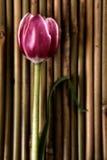 Fiore di zen Immagini Stock