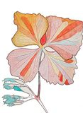 Fiore dipinto illustrato Fotografia Stock