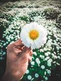Fiore a disposizione fotografie stock libere da diritti