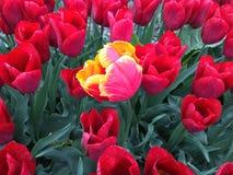 Fiore distintivo Immagini Stock