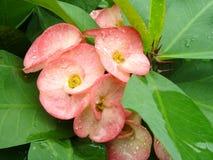Fiore dopo la pioggia Immagine Stock Libera da Diritti