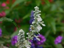 Fiore dopo pioggia fotografia stock