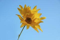 Fiore dorato Fotografie Stock Libere da Diritti