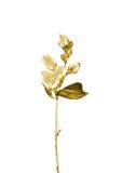 Fiore dorato Fotografia Stock