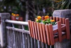 Fiore dorato nello skep Fotografia Stock