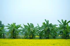 Fiore e banano verdi Immagine Stock