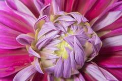 Fiore e bei petali Immagine Stock Libera da Diritti