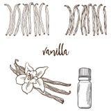 Fiore e bootle della vaniglia piccanti immagini stock