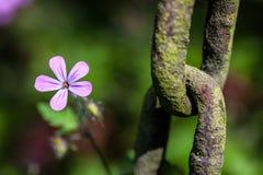Fiore e catena Immagini Stock