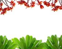 Fiore e cespuglio rossi nel fondo bianco Immagine Stock Libera da Diritti