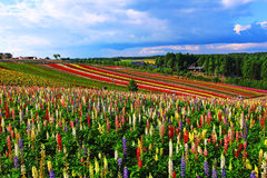 Fiore e cielo blu Colourful fotografie stock libere da diritti
