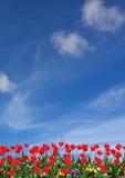 Fiore e cielo blu rossi Fotografie Stock