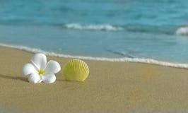 Fiore e coperture sulla spiaggia immagine stock libera da diritti