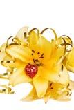 Fiore e cuore rosso Fotografia Stock Libera da Diritti