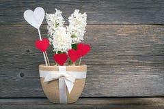 Fiore e cuore in un vaso con un arco sui bordi del fondo Immagini Stock Libere da Diritti