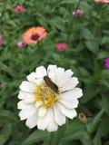 Fiore e farfalla Fotografie Stock