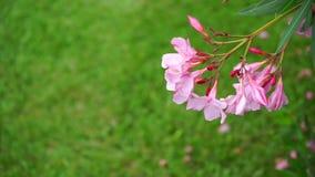 Fiore e farfalla archivi video