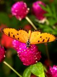 Fiore e farfalla Fotografia Stock