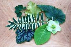 Fiore e fogli Immagine Stock Libera da Diritti