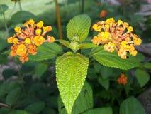Fiore e foglie Fotografie Stock Libere da Diritti