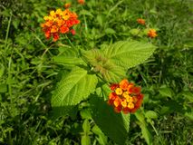 Fiore e foglie Immagini Stock