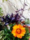 Fiore e foglie nel giardino Sorgente Fotografia Stock Libera da Diritti