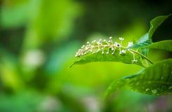 Fiore e foglie su uno sfondo naturale immagini stock