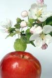 Fiore e frutta Fotografie Stock