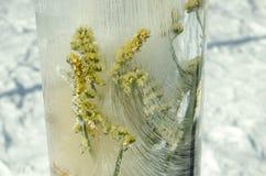 Fiore e ghiaccio Immagini Stock
