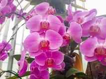 Fiore e girasole Immagini Stock