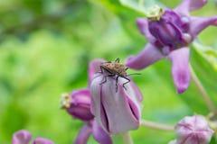 Fiore e insetto rosso del cottoc Immagini Stock