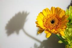 Fiore e la sua ombra Immagini Stock Libere da Diritti