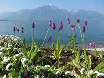 Fiore e lago porpora geneva a Montreux Fotografie Stock Libere da Diritti