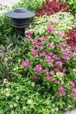 Fiore e lampada Fotografie Stock Libere da Diritti