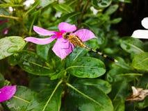 Fiore e libellula Immagine Stock
