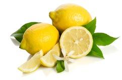 Fiore e limoni dell'albero di limoni Immagini Stock