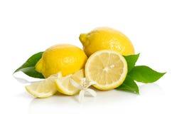 Fiore e limoni dell'albero di limoni Fotografie Stock Libere da Diritti