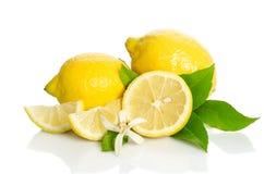 Fiore e limoni dell'albero di limoni Fotografia Stock