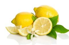 Fiore e limoni dell'albero di limoni Fotografia Stock Libera da Diritti