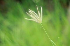 Fiore e luce solare dell'erba Immagini Stock Libere da Diritti